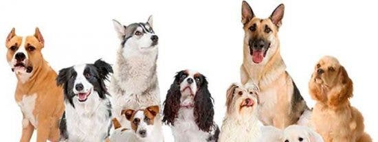 Estos son los 19 gestos que indican que tu perro intenta decirte algo