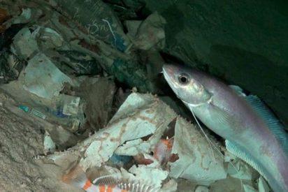 ¿Sabías que hay plásticos a la deriva en las profundidades marinas de toda Europa?