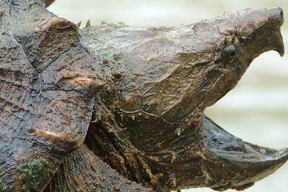 Encuentran un dedo humano dentro de una tortuga en EE.UU.