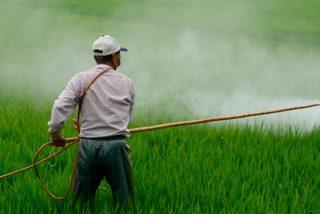 Ya se sabe cómo paliar el daño celular producido por el pesticida DDT