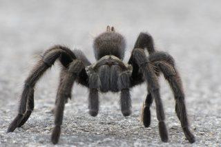 Las arañas vuelan… pero no de la forma que imaginas