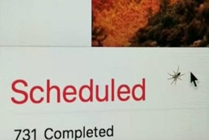Esta araña se mete detrás de la pantalla de un iMac