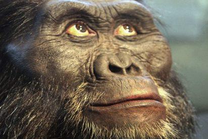 Los Australopitecos afarensis caminaban erguidos, pero sus hijos seguían trepando árboles