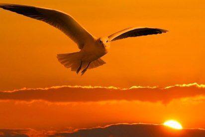 Cómo las aves nos están avisando del cambio climático