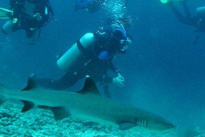 Este instructor de buceo impide que un tiburón muerda a su alumno