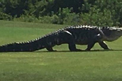 Este campo de golf en Florida es conocido como el nuevo 'Jurassic Park' por sus feroces moradores