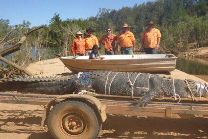 Capturan a este cocodrilo gigante de 600 kilos después de ocho años de búsqueda