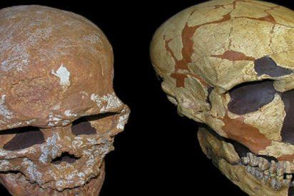 Este cráneo revela nueva información sobre el sistema visual neandertal