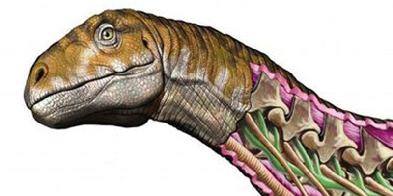 Fósil hallado en Argentina cambia todo lo que sabíamos sobre los dinosaurios gigantes