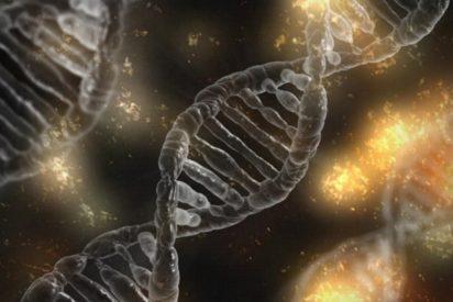 La terapia génica podría ser más eficaz en embriones que en personas adultas