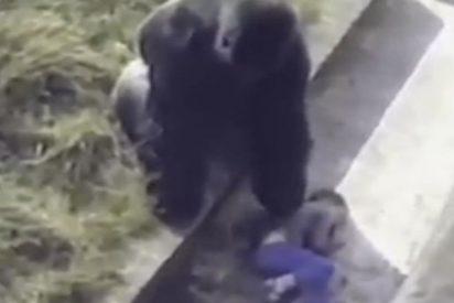Un niño cae en el foso de los gorilas y pasas esto…