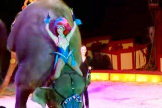 Un elefante cae encima de los espectadores de un circo en Alemania