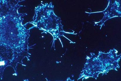 Descubren un nuevo elemento que puede ayudar a prevenir y combatir el cáncer
