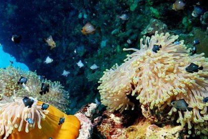"Descubren este ""maravilloso mundo de vida"" en aguas profundas de la costa de Canadá"