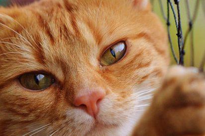 Este gato arruina la entrevista en vivo a un académico y se hace viral