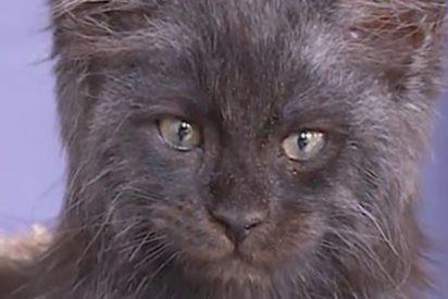 Este gato ruso desconcierta a la Red por su 'rostro humano'