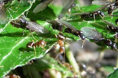 Un enjambre de insectos invade una gasolinera en EE.UU