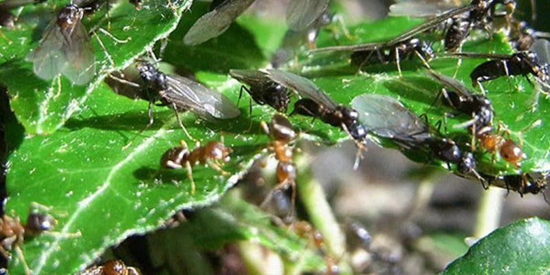 Alerta mundial por las consecuencias de la masiva extinción de insectos