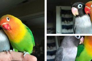 La historia de amor de estos dos pájaros conquista las redes