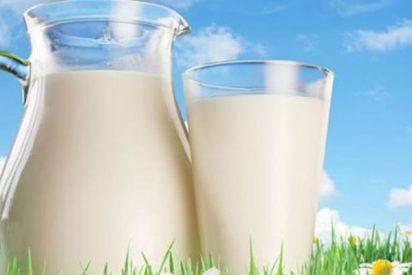 ¿Sabes por qué la mayoría de los adultos europeos podemos beber leche y los chinos no?