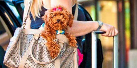 Todo lo que debes saber si viajas con tu mascota