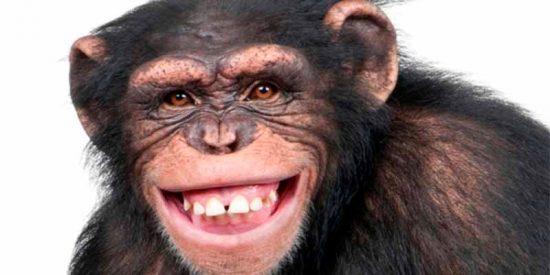 ¿Todavía no has visto al mono que roba una bicicleta para escapar de un perro?