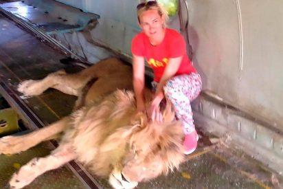 Quiso hacerse una foto con un león en un zoo y casi pierde el brazo
