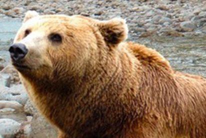 """Una mujer riñe a un oso con su """"voz de mamá"""" y pasa esto…"""