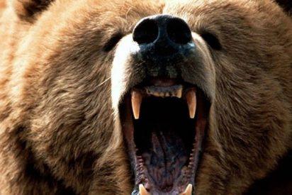 Este oso enfurecido ataca un coche con una familia en su interior