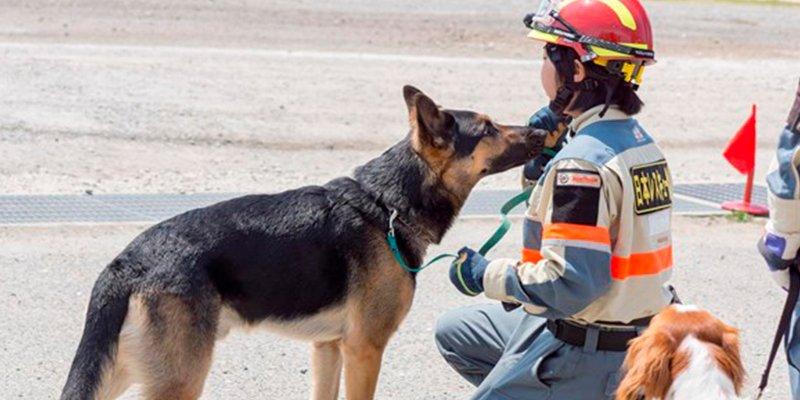 ¿Sabías que los perros protegen a los niños de posibles eccemas y el asma?