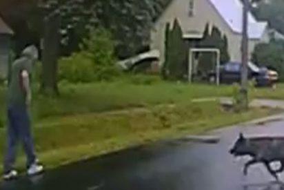 Este perro policía derriba así a un sospechoso durante un arresto en EE.UU.