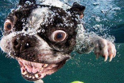 Hombre rescata de una muerte segura a un perro que cayó al agua