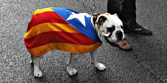 La historia del perro de Jaén a quien iban a matar y que aprendió catalán