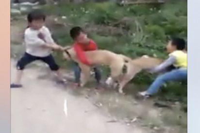 Estos niños intentan separar a estos perros enganchados por...