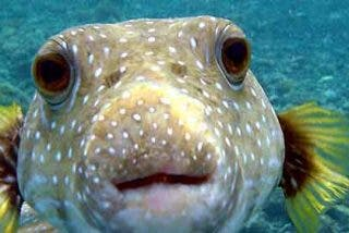 ¿Sabías que los peces no se comunican ni sonríen pero sí que sufren?