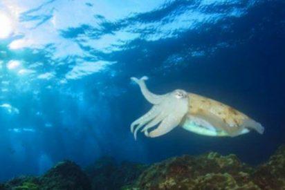 ¿Sabías que los mares en latitudes altas producen más especies que en los trópicos?