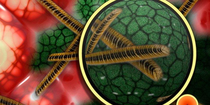 Peligrosa superbacteria ha matado ya a 10 bebés