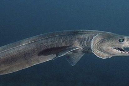 Tiburón culebra se pasea por esta playa ante el terror de los bañistas
