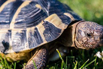Esta tortuga perdida en un lago se reúne con su dueño tres años después