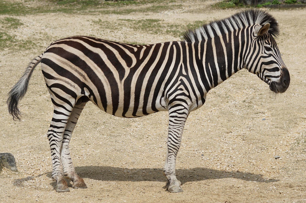 El animal más peligroso del Zoo no es el león, el oso o la serpiente... es este