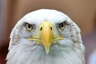 El vuelo del águila y los 7 ataques más fulminantes que puedes imaginar