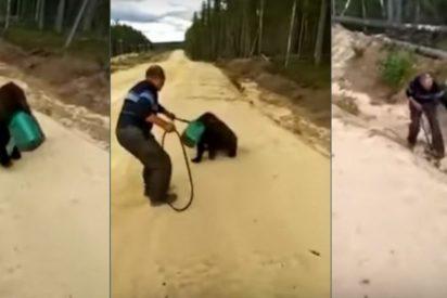 Buscan a este oso que deambula con la cabeza dentro de un bidón
