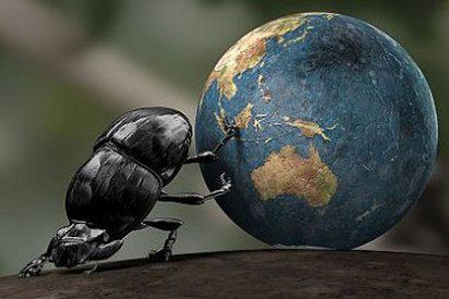 Los escarabajos ya polinizaban en el Jurásico temprano antes que las abejas