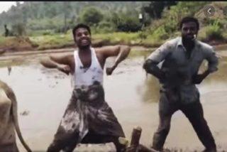 Estos granjeros indios se salen llevando 'Kiki Challenge' a otro nivel
