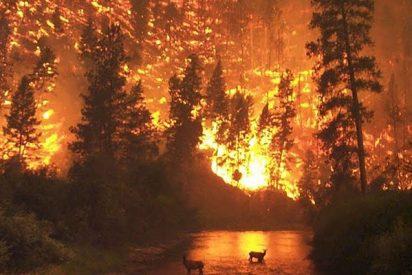 Ya son miles los desalojados en Valencia, por los terribles incendios forestales