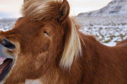 Captan la curiosa e inusual huida de este caballo en Brasil