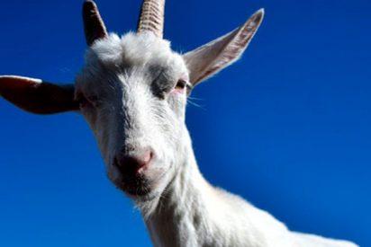 ¿Sabías que las cabras prefieren a las personas con rostros felices?