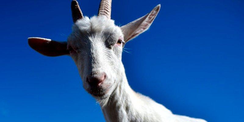 """Salvador Monzó Romero: """"La cabra"""""""
