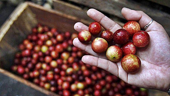 Una fruta amazónica ayuda a evitar la obesidad