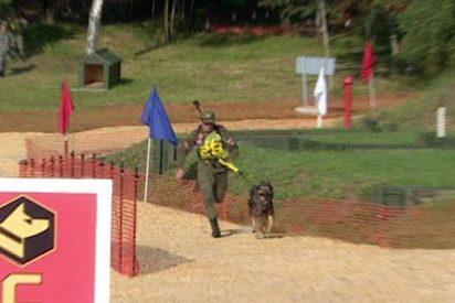 Así son las carreras de perros de los Juegos Militares Internacionales